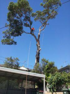 Tree trimming in sydney