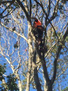 Sydney Tree Solutions