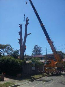 Cheap Tree services sydney
