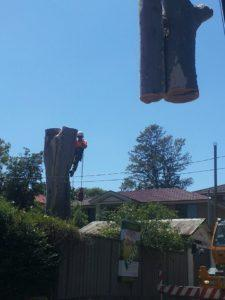 Tree lopping sydney