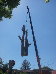 Tree company Sydney