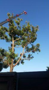 Reliable Tree lopping sydney