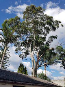 Sydney Tree Care