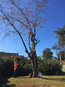Best Tree services Sydney