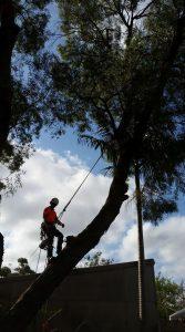 Sydney Tree Removal