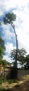 Tree Removal Cost in Sydney