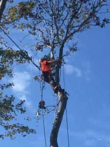 Professional Tree Cutting Sydney