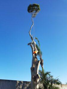 Tree Care & Tree Specialist Sydney